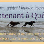 Dressage de chien - Solutions Canines SM - Solutions Canines SM