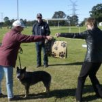 Dressage de chien -  Le Blue Mountains Dog Training Club tient son premier procès australien sous les restrictions COVID-19 Blue Mountains Magazine   - Eduquer son chien